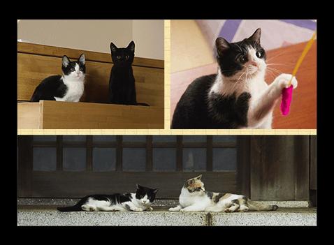 猫好きにはたまらない映画「猫なんかよんでもこない。」が1月30日より上映開始