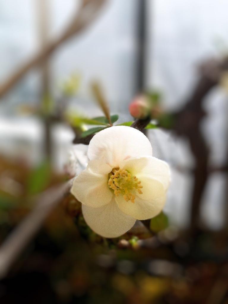 ボケ 2010_03_20