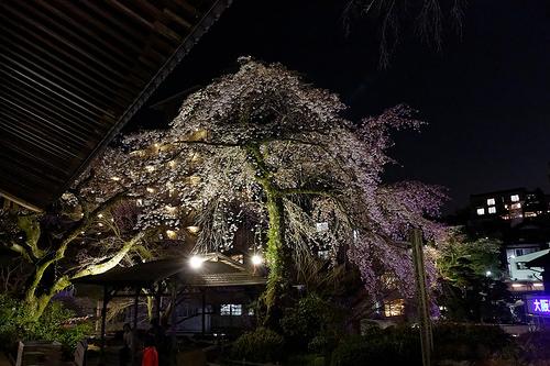 有馬温泉、善福寺・有馬川の夜桜をiPhone 5sとEOS 5D Mark III