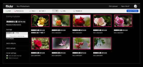 Flickr Album 015