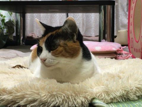 最近テレビCMで猫を多く見かける、実際にペット飼育数で猫が犬を逆転するか?