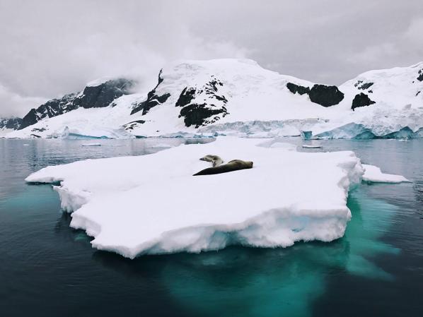 氷点下の南極で「iPhone 7」を使って野生生物と風景を撮影