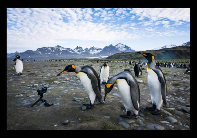 Antarctica 001 z