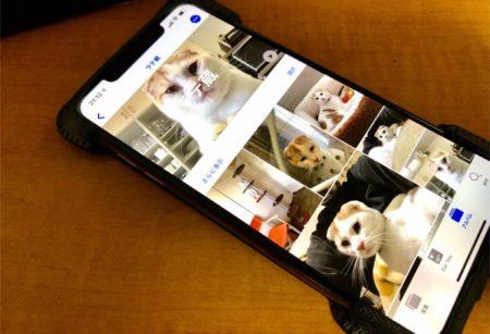 iOS 13では、iPhoneに犬や猫を認識する機能がある