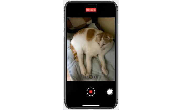 iPhoneで素早くペットの動画を撮影したい、その方法とは