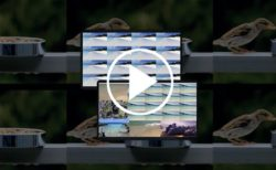 【Mac】同じ1つ、あるいは複数の動画ファイルを複数同時に再生、マルチモニタ対応の「VScenePlayer」