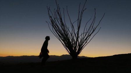 Apple、Dolby Visionに焦点を当てた「Shot on iPhone 12 Pro by Emmanuel Lubezki」を公開