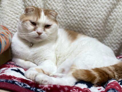 愛猫家は気になる!アプリ「MeowTalk」は猫の鳴き声を人間が認識できる音声に変換できるのだろうか?